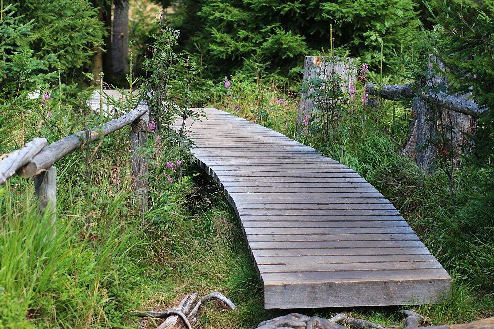 Oderteich Harz Bohlenweg