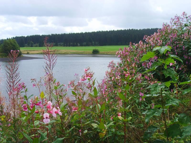 Wasserwanderweg Sumpfteich Harz